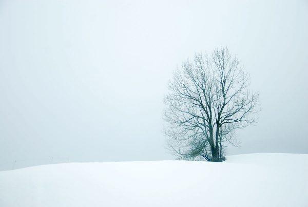 Lonely Snow Tree